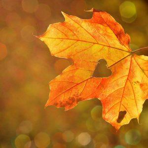 AyurVida uma forma de viver em harmonia com o Outono
